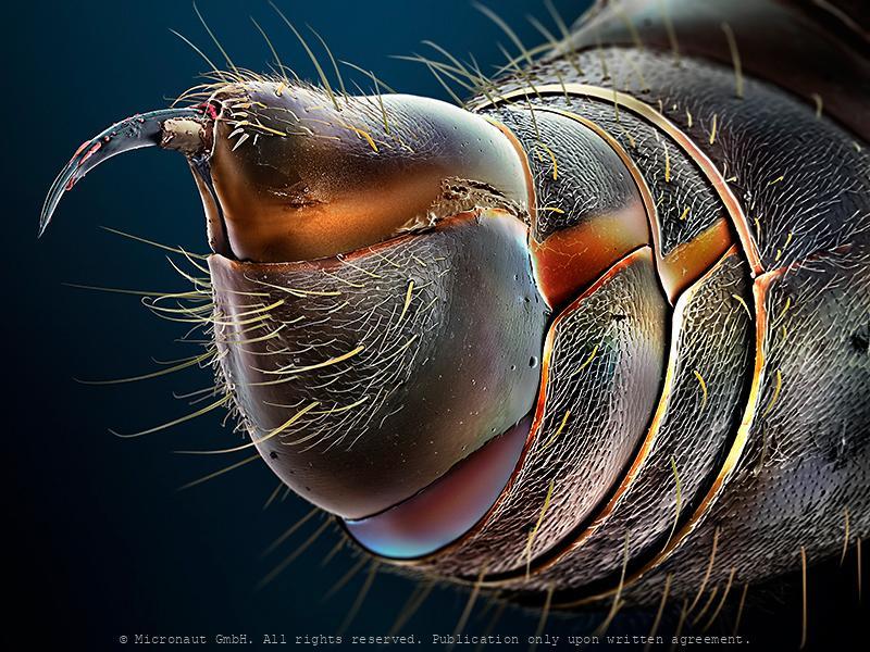 Ant Stinger
