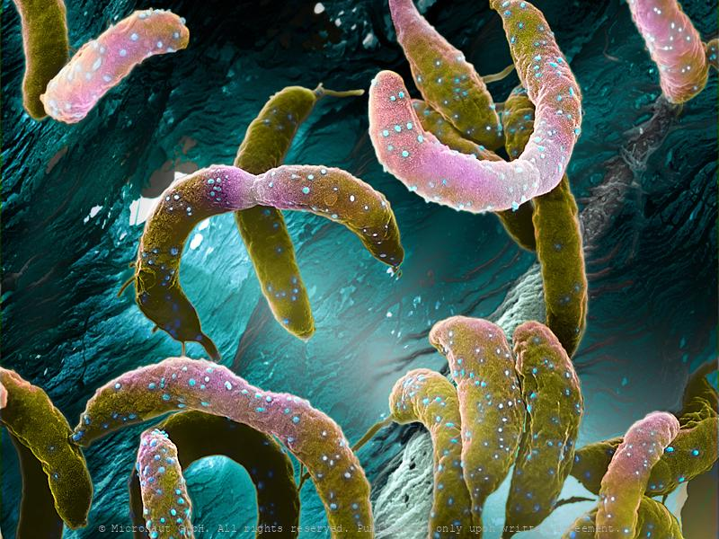 Waterbacteria