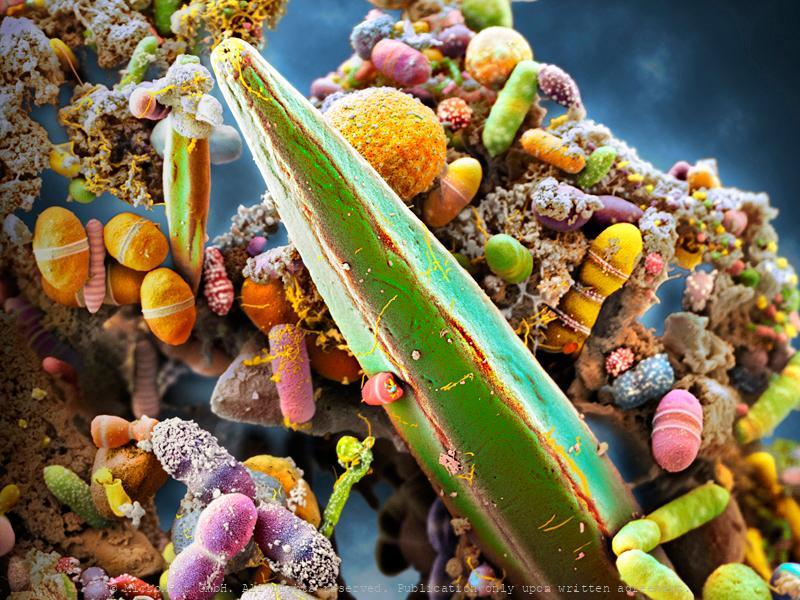 The Human Microbiome, Nr.1