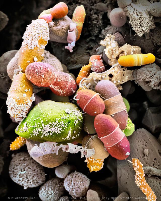 The Human Microbiome, Nr.2
