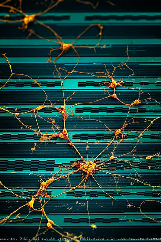 Brain Cells on a Chip (blue)