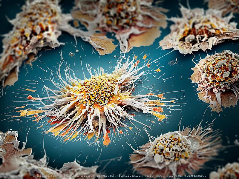 Dendritic Cells (H. sapiens)