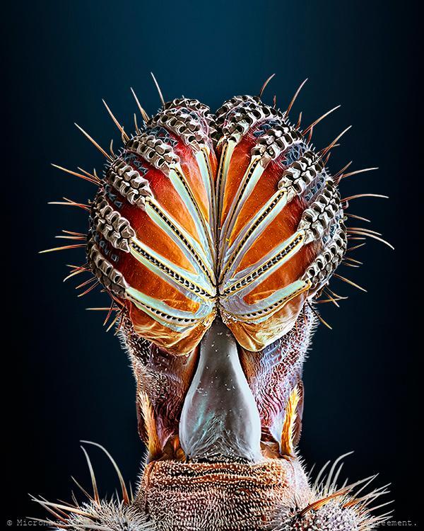 Hyper realistic fly proboscis (Drosophila melanogaster)