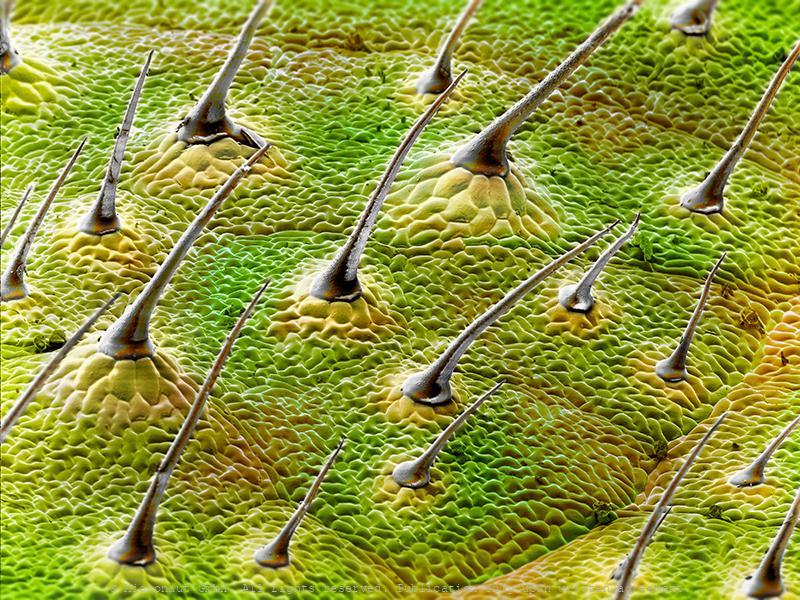 Leaf surface - Magnification makes you a stranger
