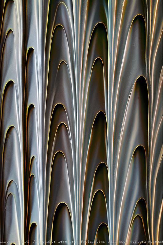 Pitcher plant (Nepenthes hemsleyana), Nr.1