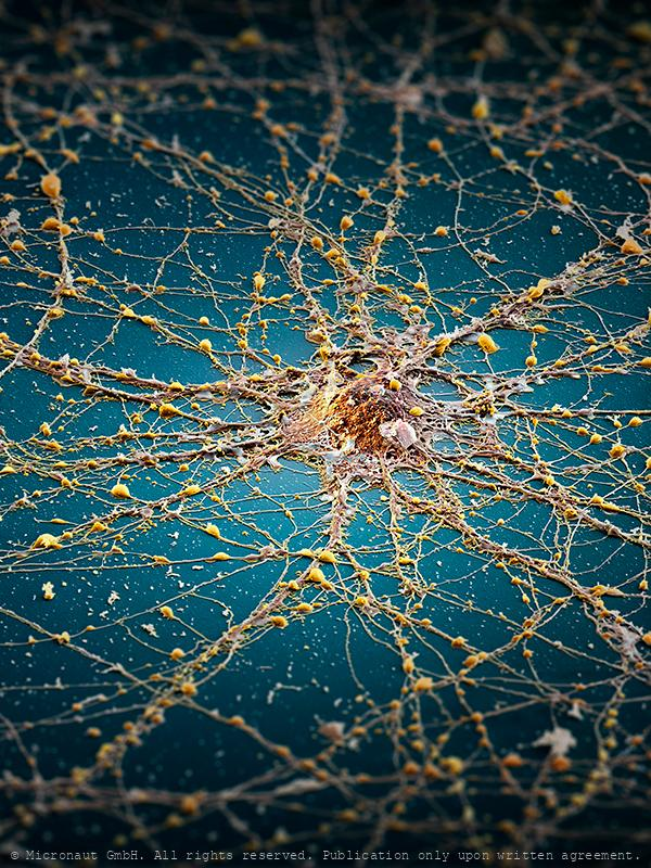 The Neuronal Megacity (Brain cell)