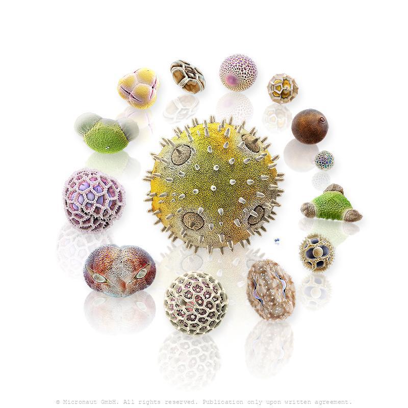 Pollen Universe