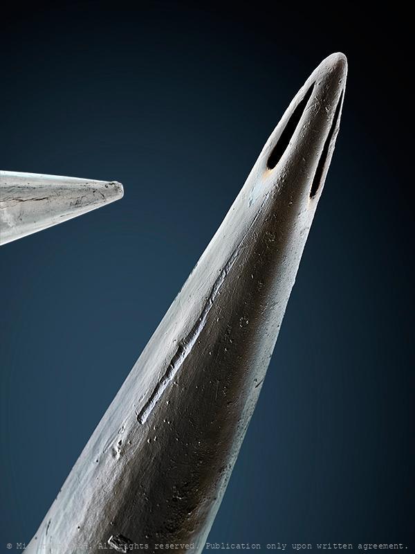Scorpion injection needle (L. quinquestriatus)