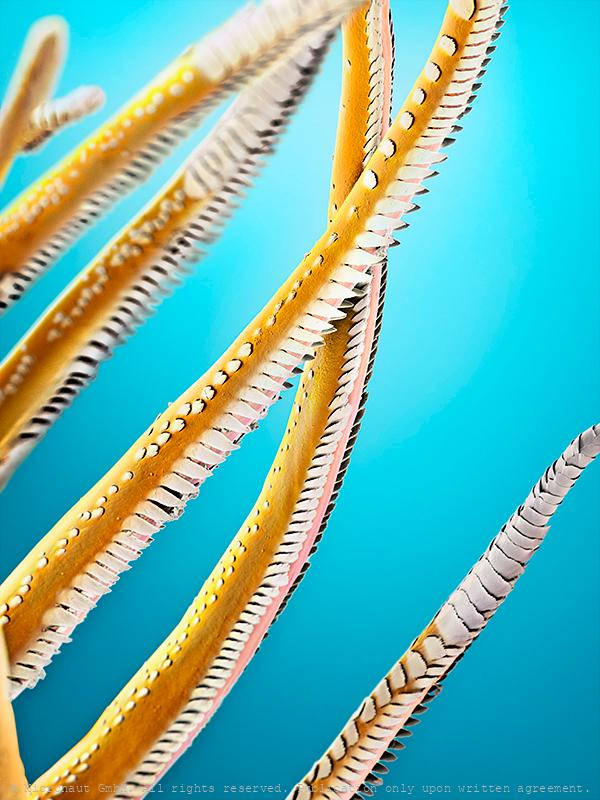 Sensory hairs of a shrimp