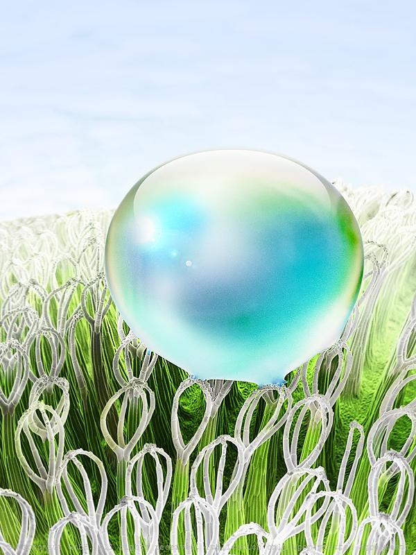 Superhydrophobic surface (Salvinia molesta)